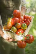 Woman holding basket of tomatoes (various types) Stock Photos