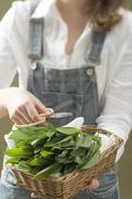 Woman holding basket of fresh ramsons (wild garlic) & scissors Stock Photos