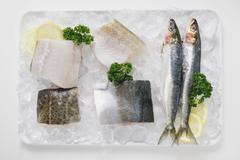 Various types of fish on a platter of ice Stock Photos