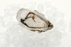 Fresh oyster, opened, on ice cubes - stock photo