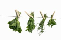 Herbs drying on a washing line - stock photo