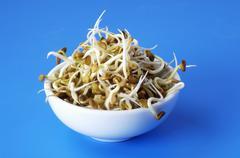 Fenugreek sprouts in white bowl Stock Photos