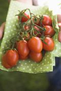 Hands holding fresh tomatoes on green cloth - stock photo