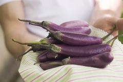 Hands holding fresh aubergines on tea towel - stock photo