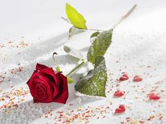 Red rose surrounded by sugar, sprinkles and hearts Stock Photos