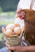 Woman holding live hen and basket of eggs - stock photo