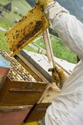 Beekeeper tending beehive - stock photo