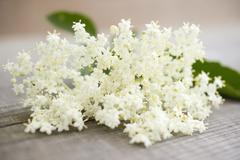 Elderflowers - stock photo