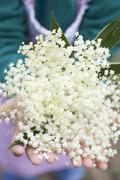 Hands holding elderflowers Stock Photos
