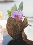 Opened coconut with orchid, sea in background Stock Photos