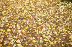 Stock Photo of detail, autumn leaves