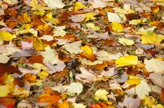 detail, autumn leaves - stock photo
