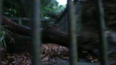 0069-Jaguar Zoo Onca Captivity 2 Stock Footage