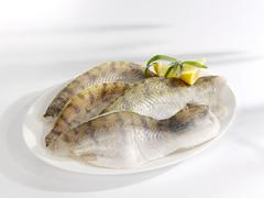 Fresh zander fillets with lemon wedges Stock Photos