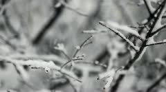 Loop: Rack focus snowy branches close-up Stock Footage