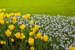 Colorful flowerbeds with grass Stock Photos