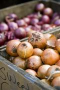 Sweet Onions and Shallots at Farmer's Market Stock Photos