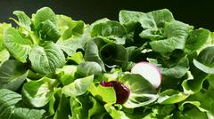 Mixed salad leaves with slice of radish - stock photo