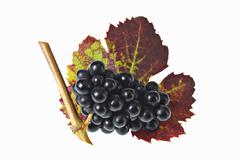 Black grapes with leaf Stock Photos