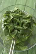Blanched spinach in strainer - stock photo