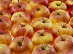 Apples (full-frame) - stock photo