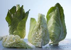 Pointed cabbage, whole and pieces Stock Photos