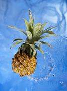 Stock Photo of A baby pineapple in water