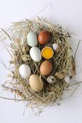 Stock Photo of Various types of eggs on hay