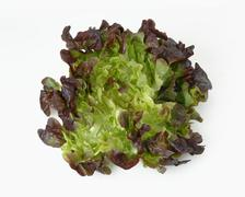 An oak leaf lettuce Stock Photos