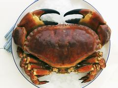 Crab on crushed ice - stock photo