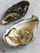 Opened oyster on marble Stock Photos