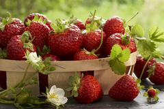 Punnet of freshly picked strawberries Stock Photos