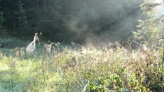 Spiderweb spider web meadow grass fog vapour evaporate Stock Footage