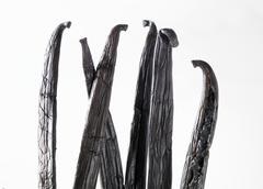 Several vanilla pods (detail) - stock photo