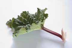 Stick of rhubarb with leaf - stock photo