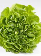 Stock Photo of Lettuce