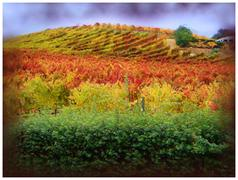 Colors of Napa Valley Stock Illustration