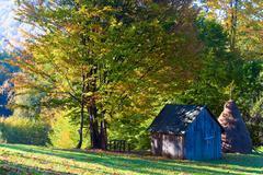 Autumn beech forest Stock Photos