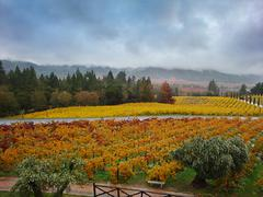 The Napa Valley Rainstorm Stock Photos