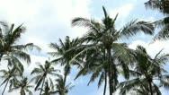 Palms Stock Footage