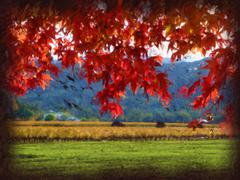 The Red Leaves in Napa valley Stock Illustration