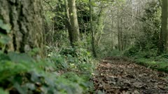 Cemetery: Autumnal woodland walk in an English graveyard Stock Footage