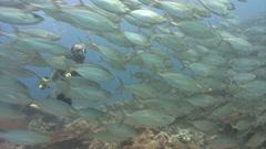 SCUBA Diver shocks school of fish Stock Footage