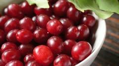 Cornelian cherry (Cornus mas) Stock Footage