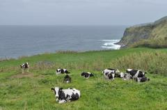 Cows in coastal ambiance Stock Photos