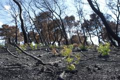 New life after forest fire Stock Photos