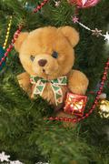 plush toy bear in the banch of cristmas-tree - stock photo