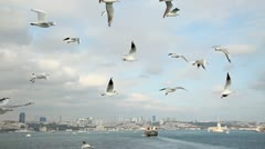 Flying seagulls. Bosphorus, Turkey Stock Footage