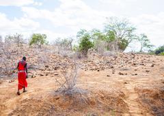 masai in savanna - stock photo