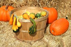 Bunch of gourds in a basket with hay Stock Photos